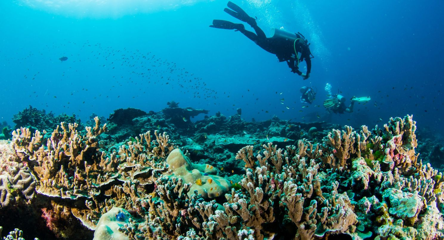 what are the pros and cons of s diving journal what s so awesome about diving