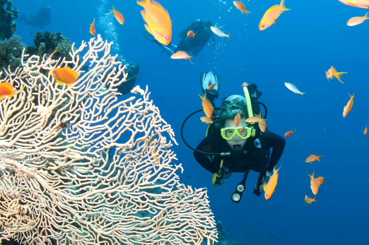 What wildlife will I see on the Great Barrier Reef
