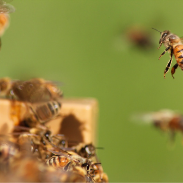 Two-night beekeeping course in rural France